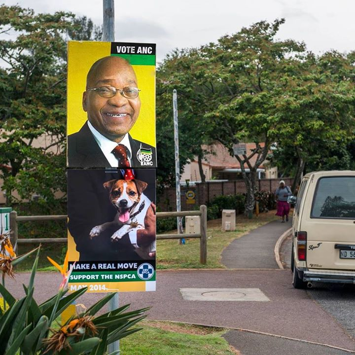 nspca-election-posters-2-anc