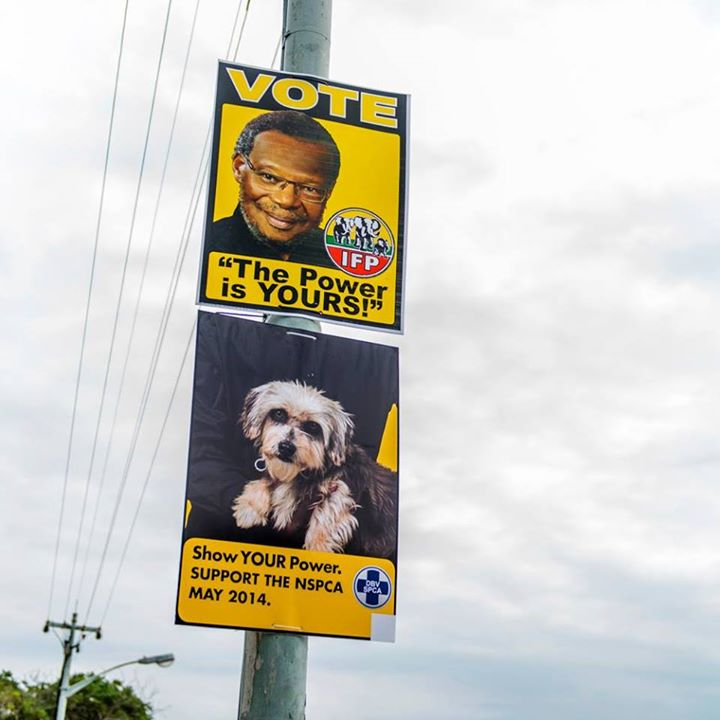 nspca-election-posters-3