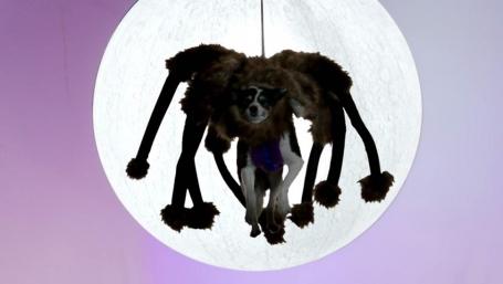 YouTube Rewind spider dog
