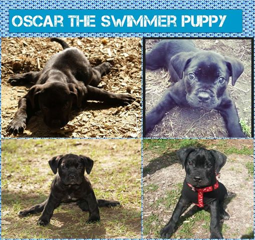 Oscar the Swimming Pup before