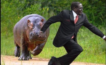 Mugabe being chased by Hippo #mugabefalls