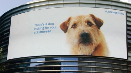 batterseas digital dog - Barley