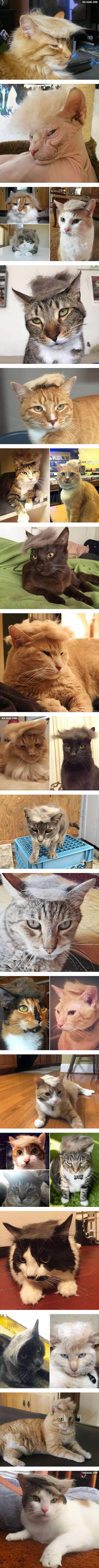 donald-trump-cat-hair