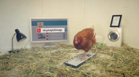 Betty the live Tweeting Chicken for Chicken Treat